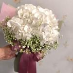 Graduation Hydrangea-Bloom