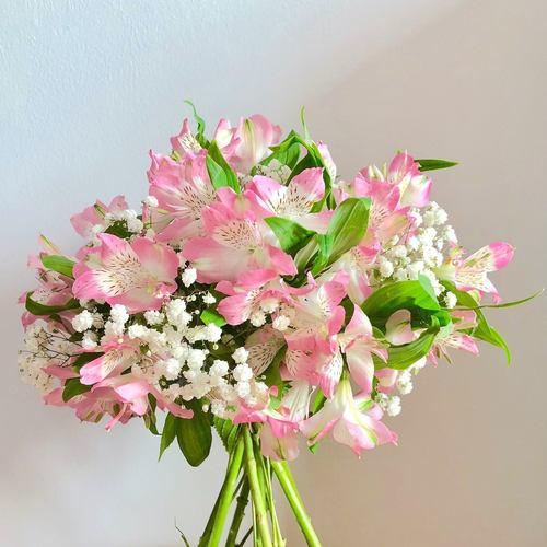 Pink Alstro