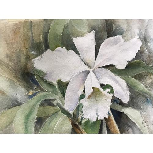 White Cattleya in Watercolor (Framed)