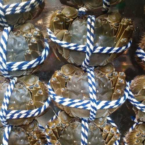 大閘蟹 公蟹(6.0両至6.8両) -- (活鮮)