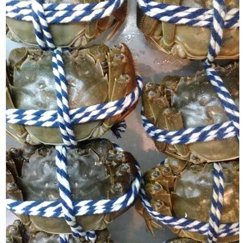 大閘蟹 公蟹(4.1両至4.5両) -- ( 活鮮 )