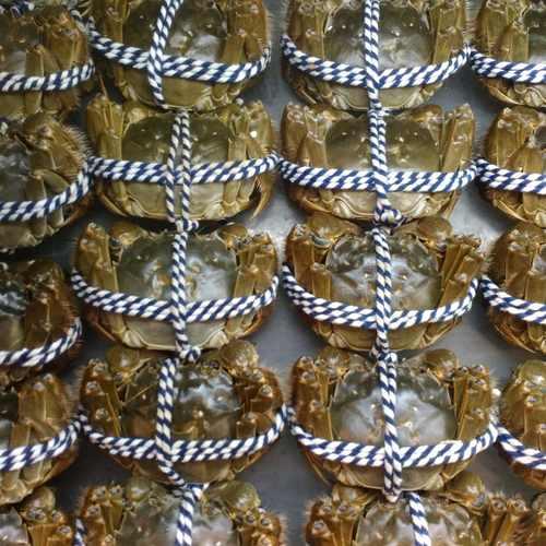 大閘蟹 公蟹3.5両至4両 --  活鮮