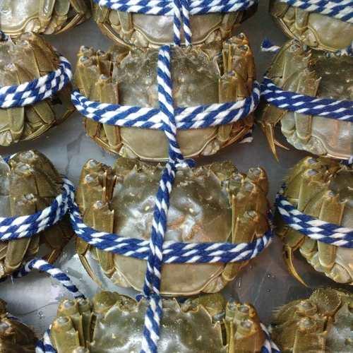 大閘蟹 母蟹3.4両至4両 -- 活鮮
