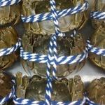 大閘蟹 公蟹4.7両至5.2両 -- 活鮮