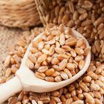 Sharabathi Wheat.jpg