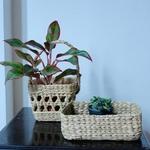 Kauna Grass - Fruit Basket
