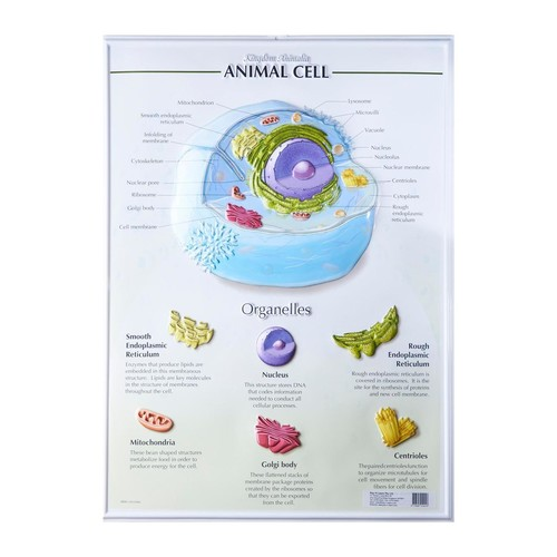 Bio Poster Animal Cell