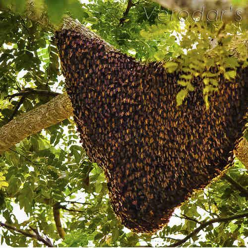 Rain Forest Honey (260g)