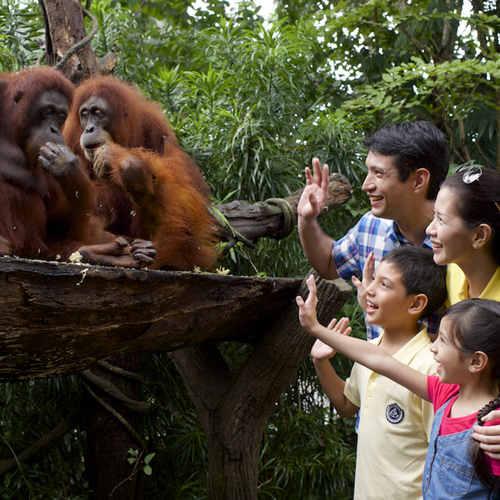 Singapore Zoo (Adult)