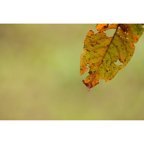 A Leaf Story