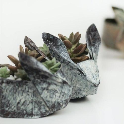 Workshop - Succulent