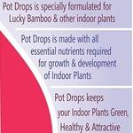 Pot drops - 100 ml