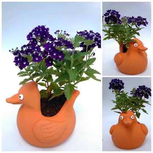 Terracotta clay pot - Bird