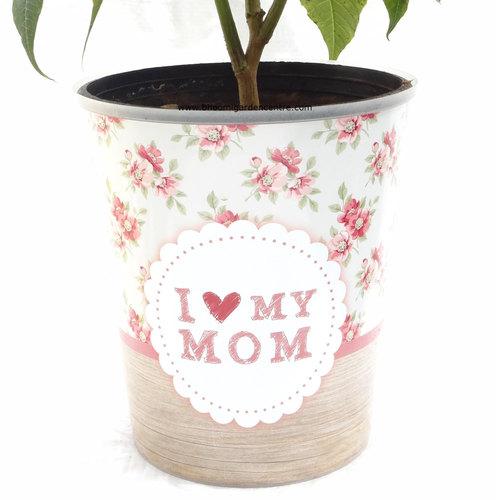 "Poinsettia in  ""I love my mom"""