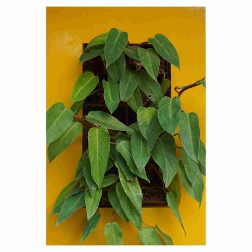 Indoor Vertical Garden System With Bright Yellow Frame