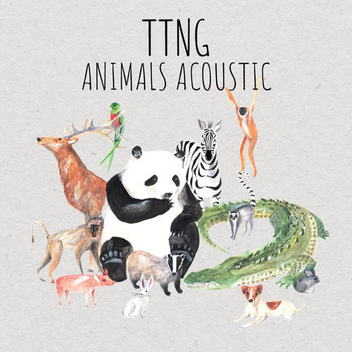 TTNG - Animals Acoustic LP