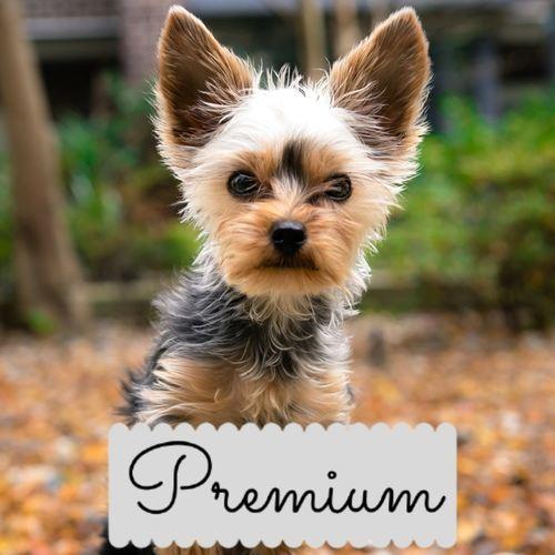 PREMIUM 1 Month Subscription Plan
