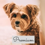 PREMIUM 6 Month Subscription Plan