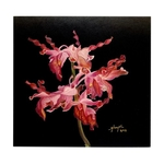 Sketches Of Singapore Series Orchid Postcards - Dendrobium Margaret Thatcher by Glacy Soh