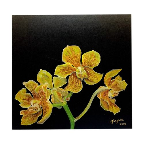 Sketches Of Singapore Series Orchid Postcards - Paravanda Nelson Mandela by Glacy Soh