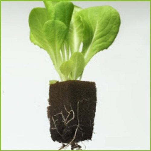 Grow Cube Qty 1248