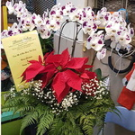 8 Moth Orchids, Poinsettia & Baby's Breath