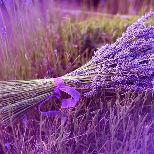 Mori Reed Diffuser ( Lavender )