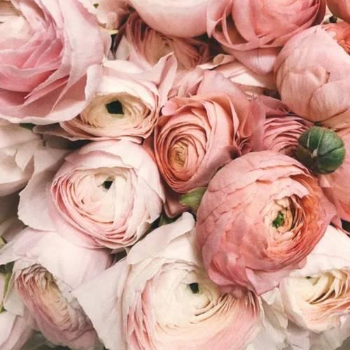 You make me Blush! Rose Clay Mask