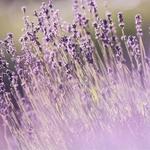 I Need Time Alone Rose Lavender Bath Salt